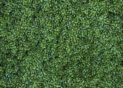 Backdrop - Boxwood